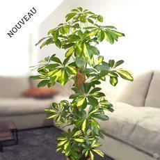 plante interieur