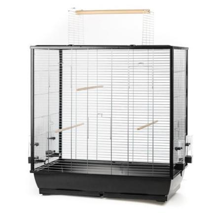 cage grande perruche