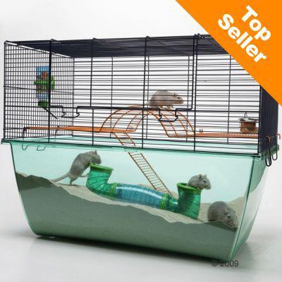 cage souris