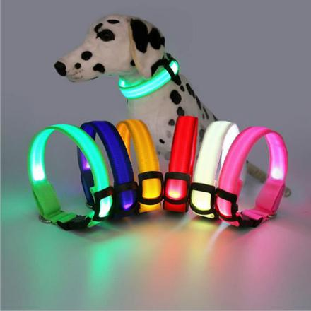 collier pour chien lumineux