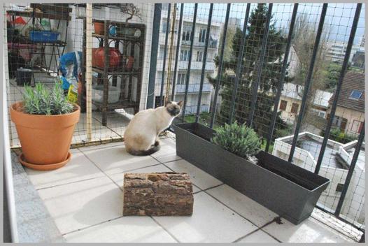 filet de protection pour chat castorama