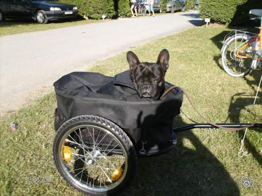 remorque velo pour chien decathlon