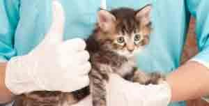 soigner coryza chat