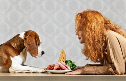viande chien